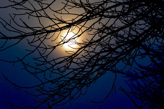 'Captured Moonbeam.'